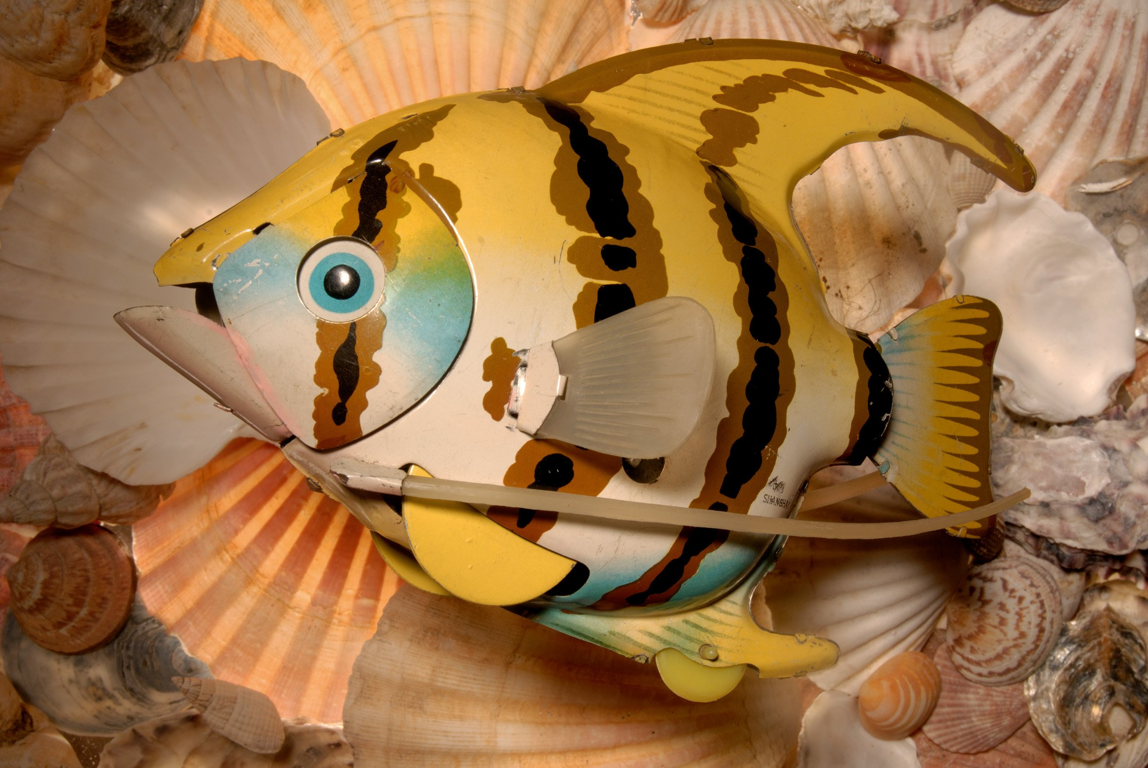 04) Angel Fish, Shanghai China.jpg